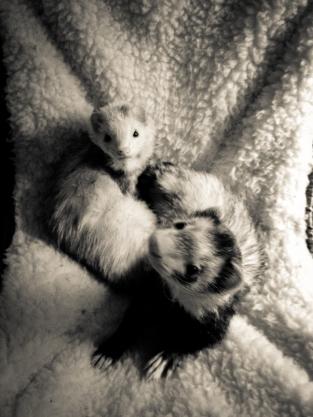 Olivia and Percy 2011 | Photo by Leslie I. Benson