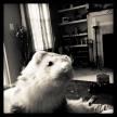 Percy 2012 | Photo by Leslie I. Benson